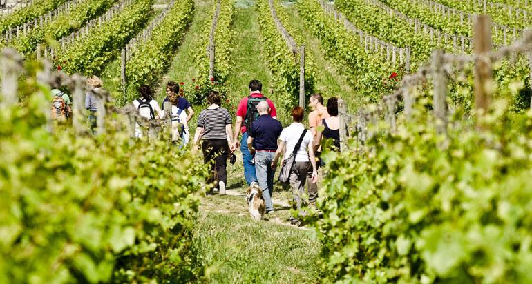 camminata nelle vigne del Monferrato